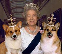 queen_dogs